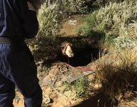 Watch: Camel trapped in water-filled Dubai hole rescued